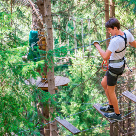 Tree Top Climbing